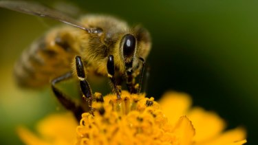 400 bee or honey thefts were reported in the six months to January.