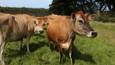 Global dairy prices have fallen around 60 per cent since early 2014.