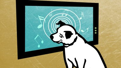 Play bark: music for pets left alone