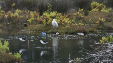Barton Park's wetlands are one area potentially under threat from development, the Total Environment Centre says.