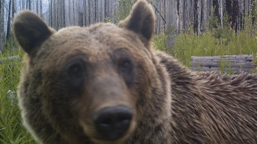 Bear spray is actually a real thing.