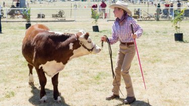 Australia exports cattle to Japan. Pictured: a cattle show in New South Wales.