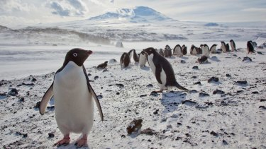 Antarctic research programs are also under a cloud.
