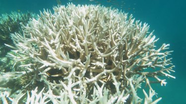 Failure to meet the Paris climate targets would be more bad news for the world's corals.