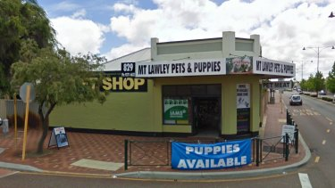 Mt Lawley Pets & Puppies in Inglewood.
