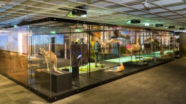 The 'Wild Side' exhibition at Queensland Museum will open tomorrow.