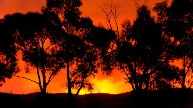 A bushfire near Healesville on Black Saturday.