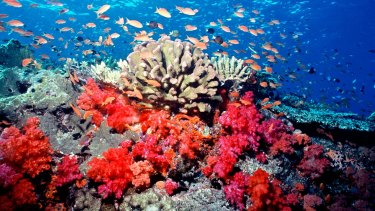 Bright coral from Fiji.
