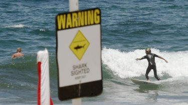 Despite a record stretch of beach closures in Newcastle, shark sightings are not showing a discernible increase.