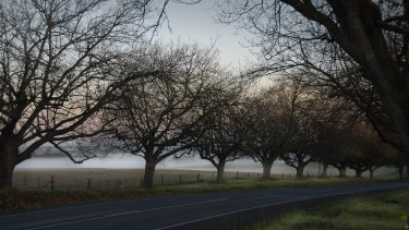 For the past 10 years, Sarah Wood has been photographing Australia's avenues of honour, including this one at Woodend.