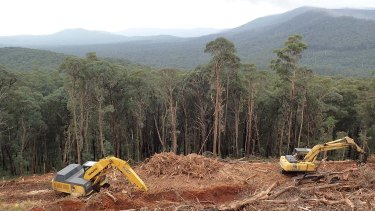 Logging in a forest in Victoria's central highlands.