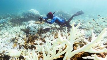 Bleaching corals off Port Douglas.
