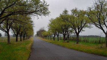 The 22-kilometre WWI avenue of honour in Ballarat includes 3771 trees.