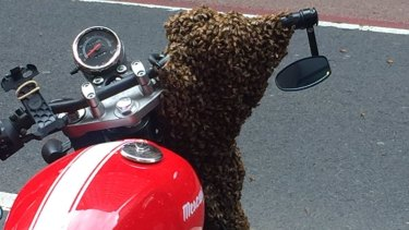 The bees swarmed to on a stationary red motorcycle, where their queen had settled.
