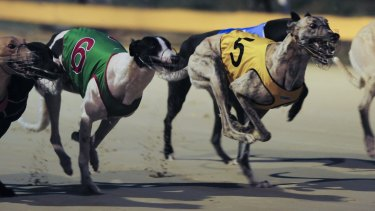 Greyhound racing will be banned in NSW from July 1, 2017 after legislation passed the NSW parliament