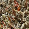 UN warns of 'major shock' as Africa locust outbreak spreads