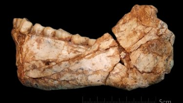 The first, almost complete adult mandible discovered at the site of Jebel Irhoud.