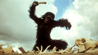 Apes learn that tools can be weapons in 2001: A Space Odyssey.