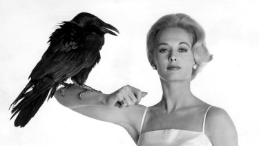 Tippi Hedren in a promotional shot for <i>The Birds</i>.