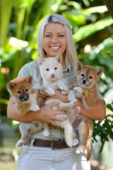 Australia Zoo dingo keeper Erin Berry with her three latest charges.