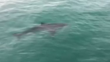 Swimmers are being urged to be careful after shark sightings around Melbourne beaches.