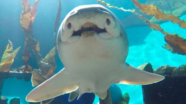 Could this be a bold, smiling shark?