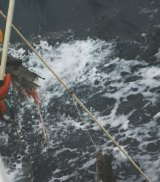 A whale got to this toothfish before fishermen.