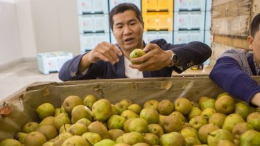Winha chairman Jackie Chung inspects pears at a farm near Shepparton.