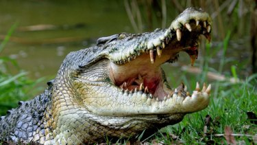 A crocodile attacked a kayaker off the Queensland coast.