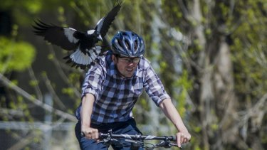 Of course there are always other dangers for cyclists, as Canberra Times photographer Jay Cronan found out in 2014.