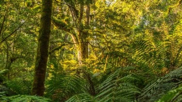 Explore the Wet Forest in Apollo Bay.