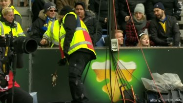 Fixer: An assistant removes the dead rats from the pitch.