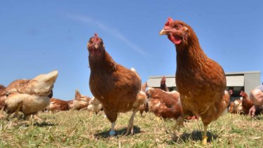 """Darling Downs has conceded that from December 2013 to October 2014 it falsely labelled its eggs as """"free range""""."""