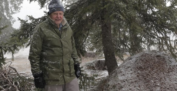 Sir David Attenborough guides us through the mysterious realm of ants.