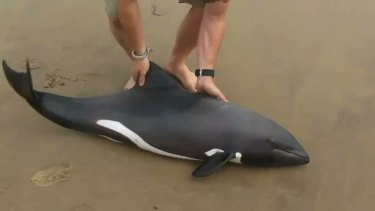 The video of Naude Dreyer rescuing a dolphin has gone viral.