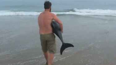 Naude Dreyer rescues a male Benguela dolphin stranded on a Namibian beach.