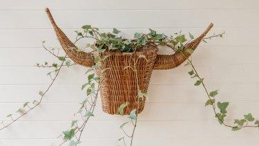 Bull head planter, $75.