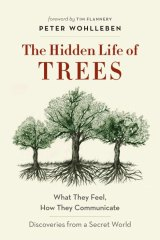 <i>The Hidden Life of Trees</i> by Peter Wohlleben.