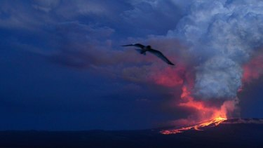 The Wolf volcano on Isabela Island spews lava during its eruption on Monday.