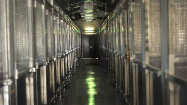 Death Row: The dog kennels at Wagga pound.