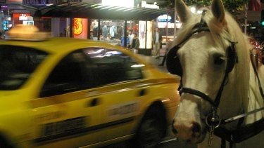A horse on Swanston Street in the city.