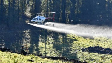 A helicopter operated by the Forest Products Commission spraying pesticides over South West pine plantations.