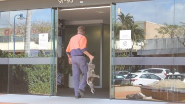 Fed up with what he says is a lack of protection for koalas, Darren Mewett has sent Redland City Council a gruesome message by dropping off a dead koala to its offices.