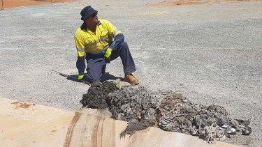 An unimpressed Water Corporation operator in the Pilbara.
