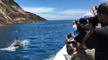 Kangaroo Island Ocean Safari owner Tony Coppins carefully monitors review sites.