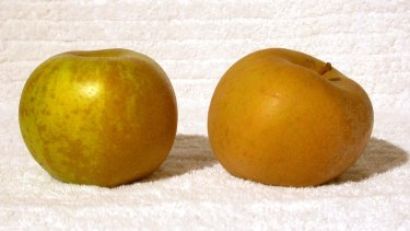 """Of the eye: Russetted apples have a rougher, brownish skin but are """"delicious"""", says Anna Lee."""