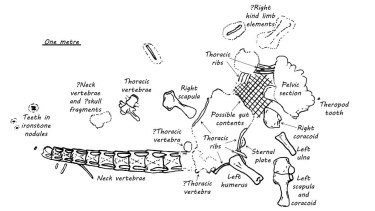 A diagram shows the dinosaur fossils found at the site.