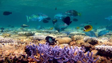 Removing predatory fish has significantly changed the make-up of the Great Barrier Reef's ecosystem, according to researchers.