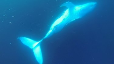 Mooloolaba Dive Company's Dan Hart describes diving with whales as 'life-changing'.
