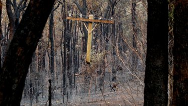 A suspended telegraph pole near the area where the Winmalee fire is believed to have started.